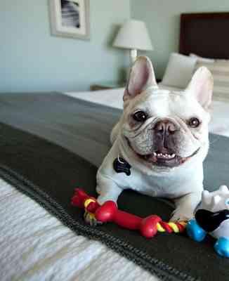 The Barkley, hotel de lujo para perros 5