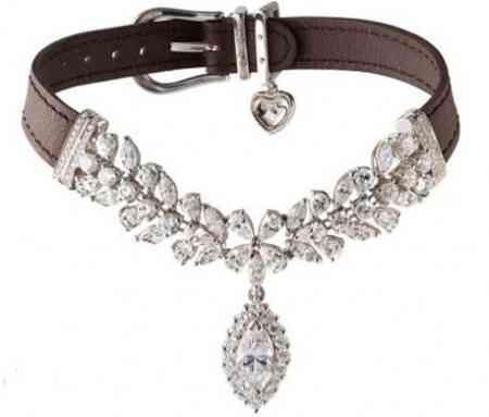 Un collar de diamantes para tu perro 3