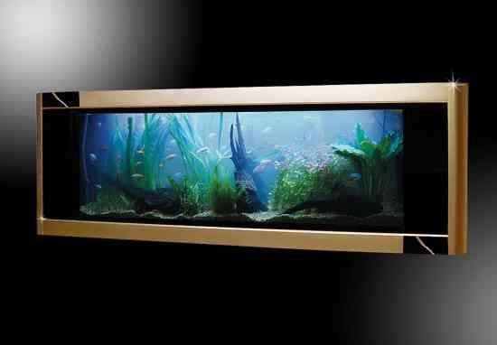 El acuario más impresionante del mundo 3