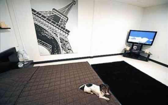 Hotel de lujo para mascotas 3