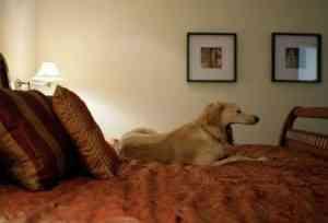 Un perro disfrutando del hotel