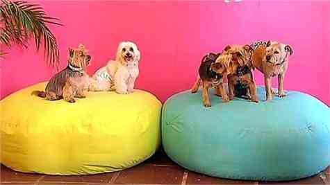 Tiny Dog Hotel Marbella