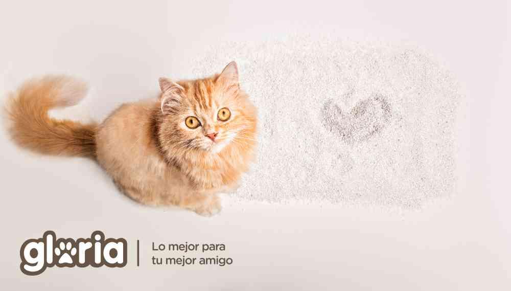 """¿Preparado para cuidar a tu gato en verano"""""""