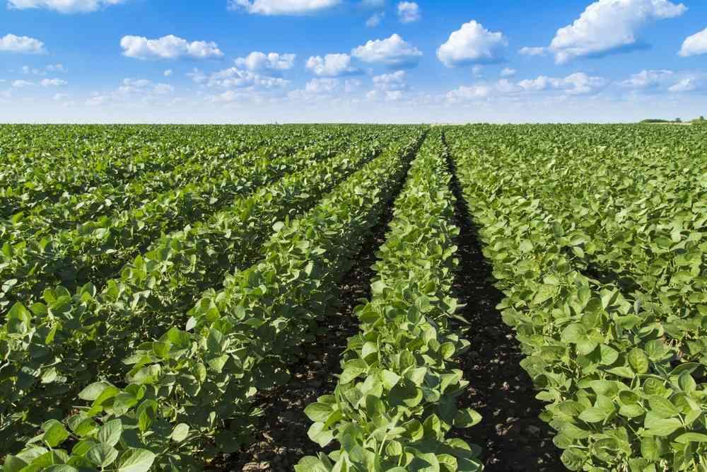 Efectos saludables de una dieta rica en productos vegetales 1