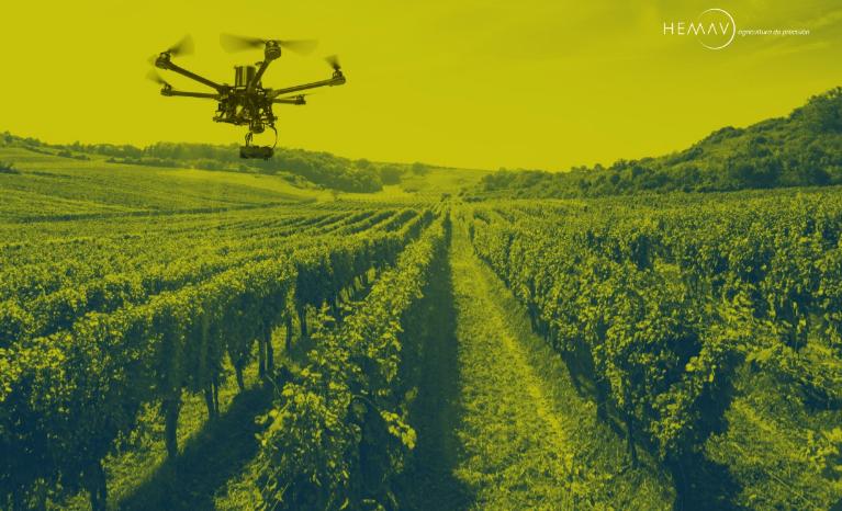 El uso de drones ayuda a mejorar la producción de los viñedos 1