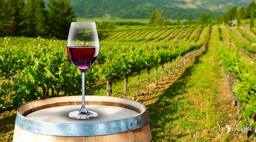 5 vinos mexicanos que te sorprenderán por su sabor 4