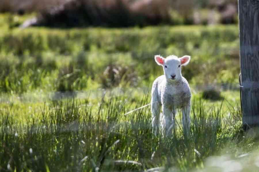 Los registros recientes muestran que la ganadería no es la responsable principal del cambio climático 1