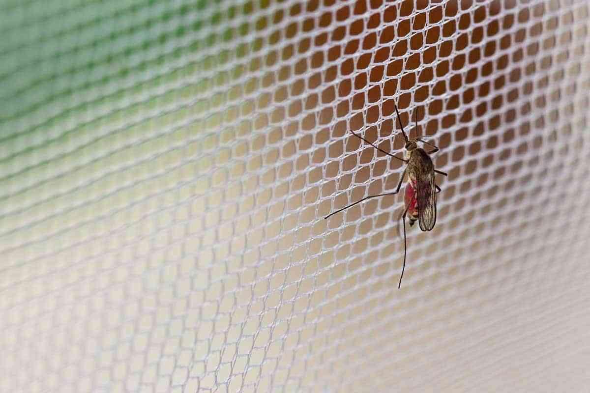 Qué tipo de mosquiteras necesito instalarme en casa